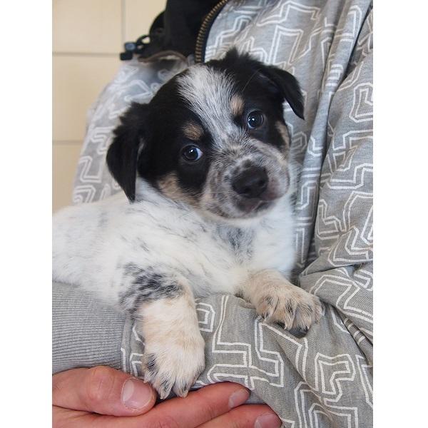 Zdjęcie Szczenięta do adopcji