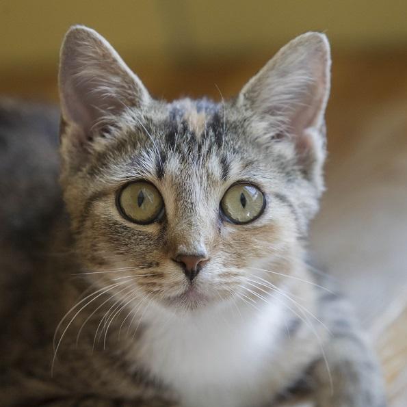 Zdjęcie dla Sterylizacja chirurgiczna kotów wolno żyjących 2019 r.