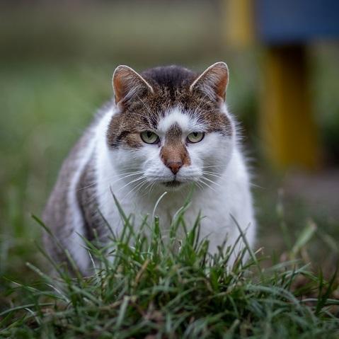 Zdjęcie dla Sterylizacja kotów wolno żyjących 2020 r.