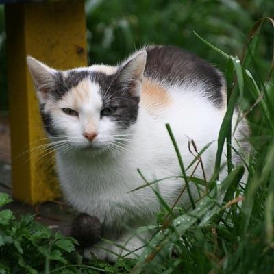 Zdjęcie dla Koty wolno żyjące