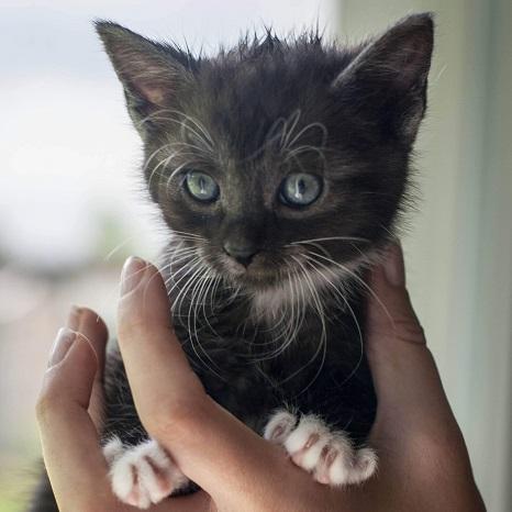 Zdjęcie Kocięta pilnie do adopcji!