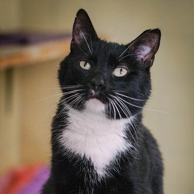 Zdjęcie Informacja o wyborze gabinetów wykonujących sterylizację kotów wolno żyjących